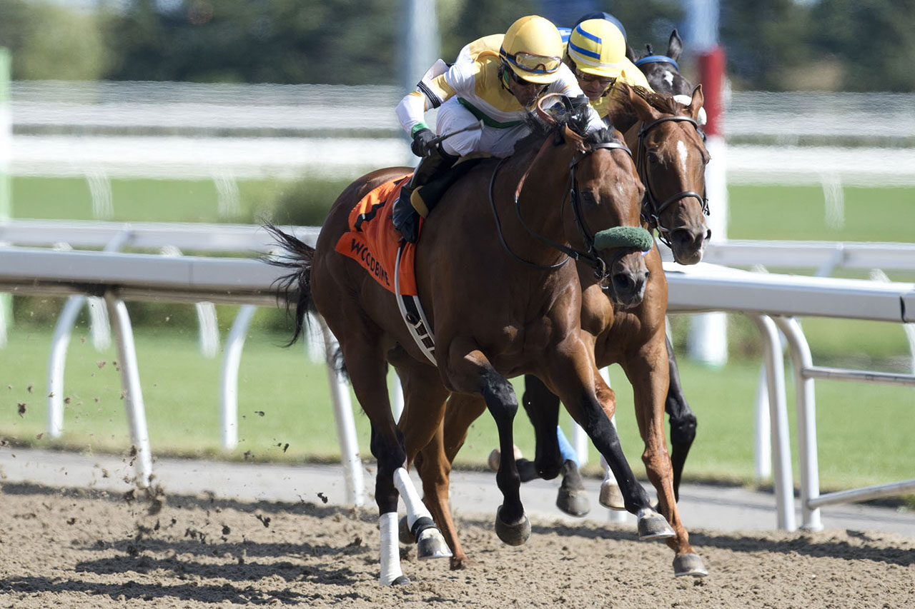 Thumbnail for Yorkton Takes Another Shot at the Nearctic Stakes at Woodbine