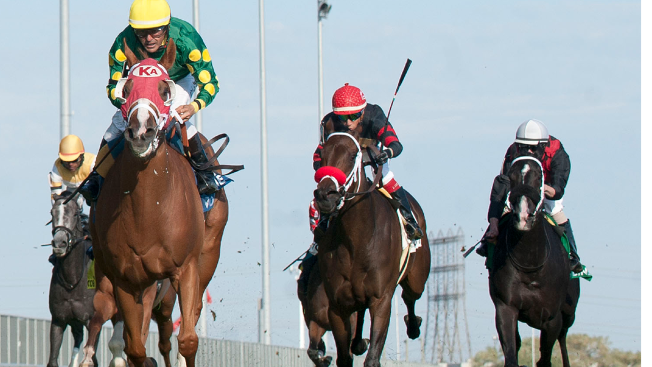 Thumbnail for Romeo Family Celebrate Stakes Win with Amalfi Coast; Bull Page Stakes goes to 'Giveaway'