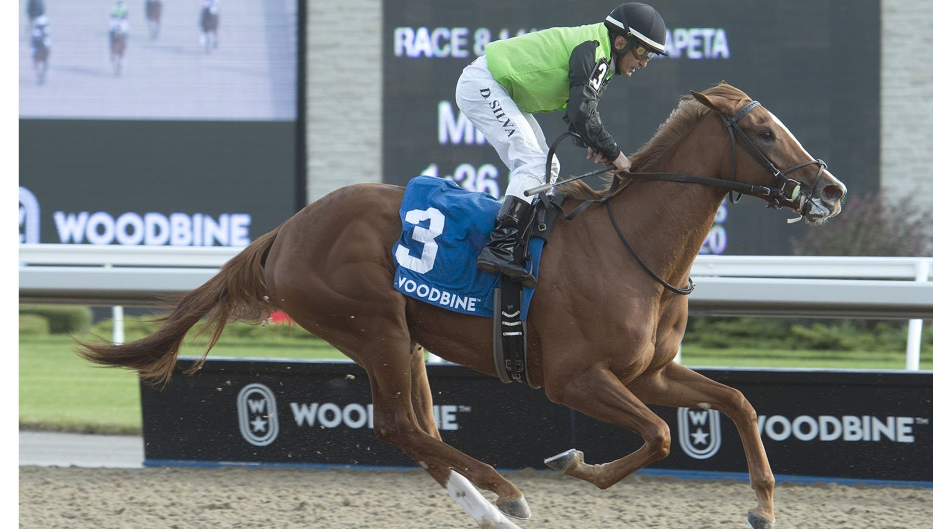 Thumbnail for Curlin's Voyage Placed First in Grade 3 Mazarine Stakes at Woodbine Oct. 5