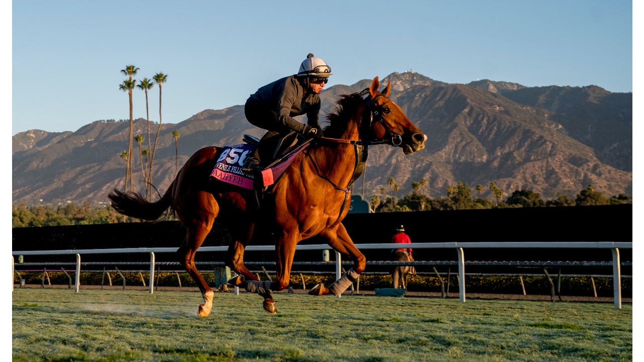 Thumbnail for Jen's Breeders' Cup News Friday; Excitement in a Hold-Your Breath Way