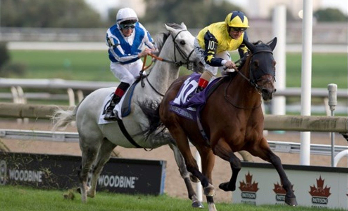 Thumbnail for Six Entered in Pattison Canadian International Saturday Oct. 12