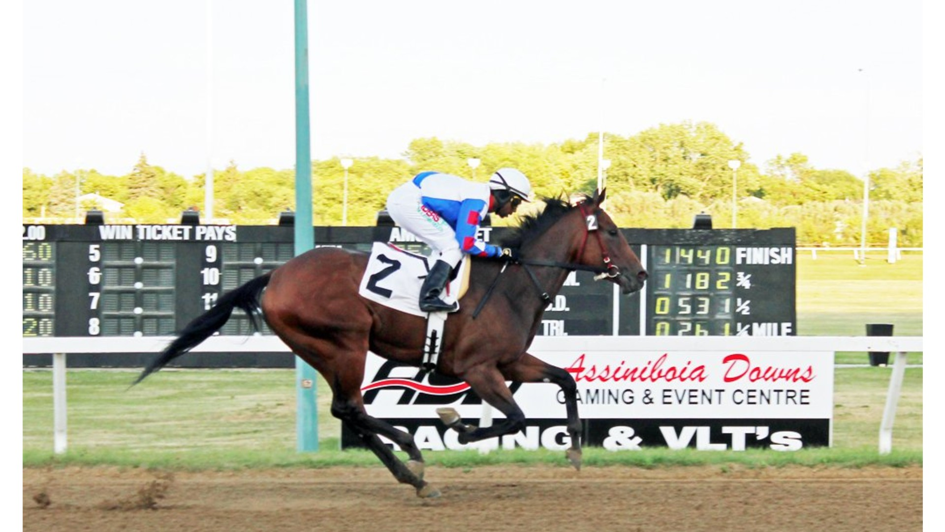 Thumbnail for Assiniboia Downs: Undefeated Hidden Grace to race in Alberta this Month