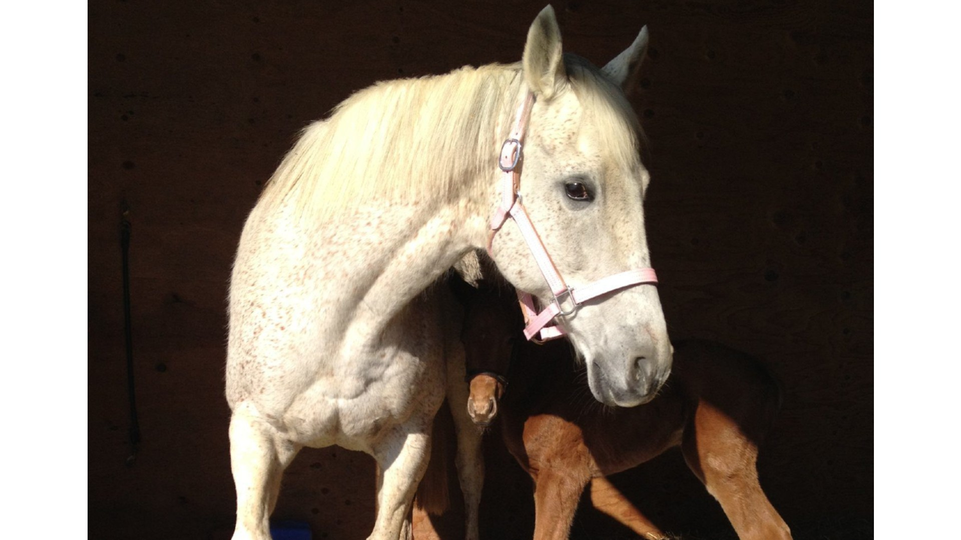 Thumbnail for Ontario Racing Announces Thoroughbred Mare Purchase Program
