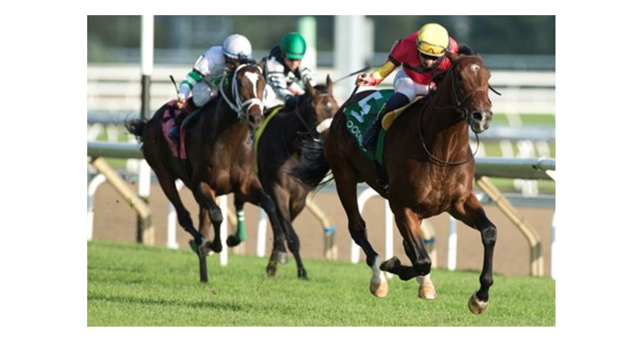 Coronation Futurity & Kennedy Road Stakes on Saturday at Woodbine