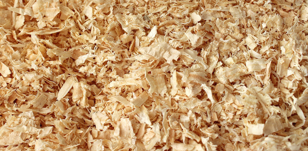 Thumbnail for Looming Canada-Wide Shavings Shortage Worries Horse Owners