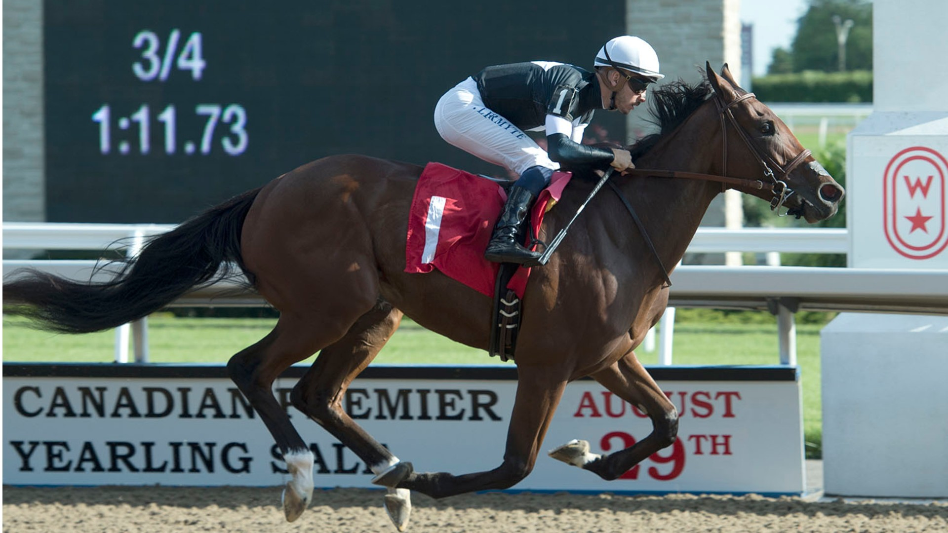 Thumbnail for Casse, master of the Mazarine Stakes, sends out trio in Saturday's feature