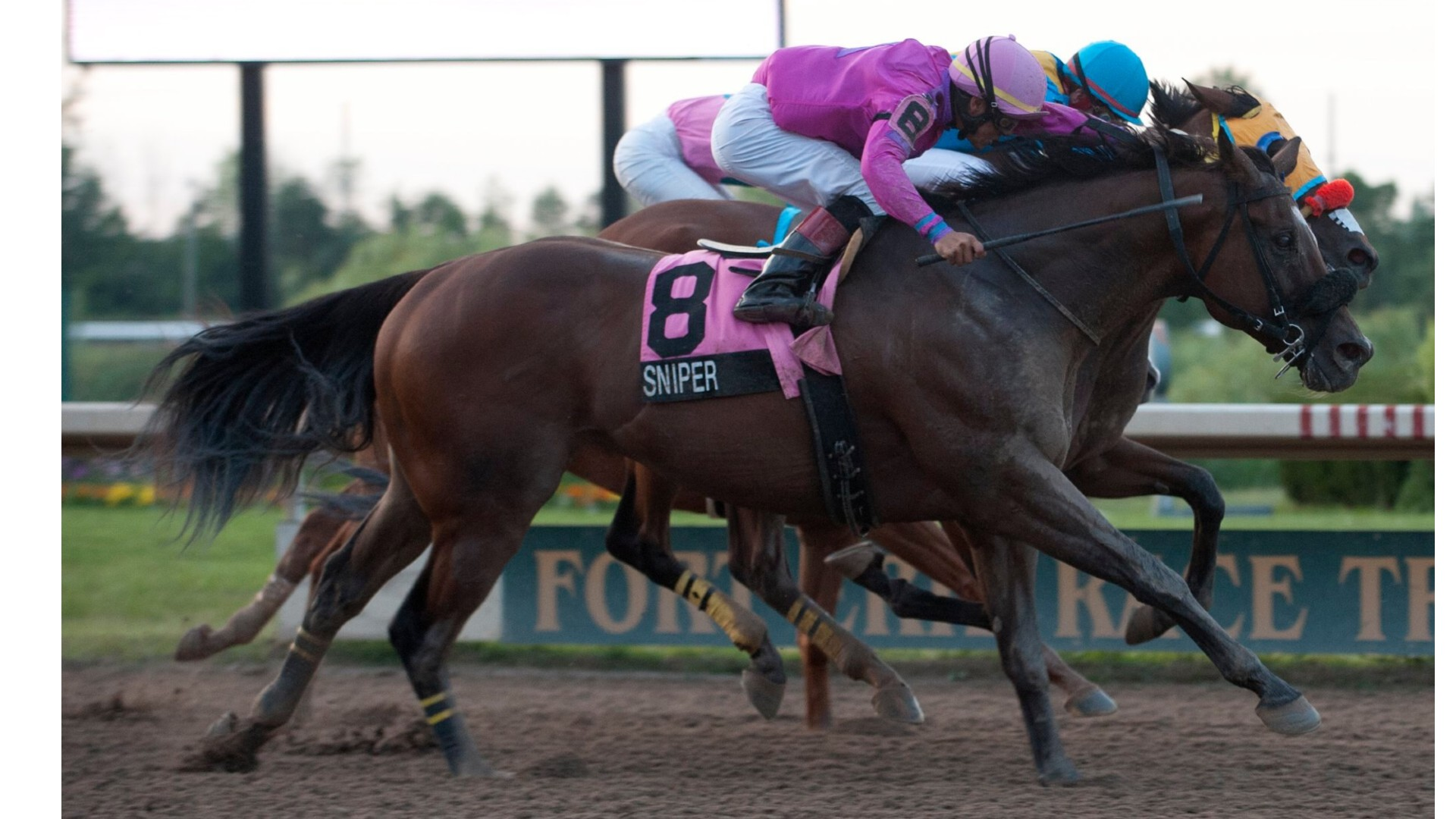 Thumbnail for Sniper is Horse of the Year: Fort Erie Awards by the HBPA Ontario