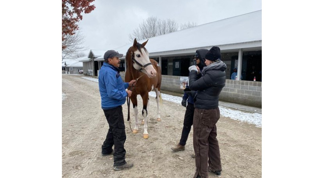 Thumbnail for Keeneland November Continues – Sessions 3 to 7