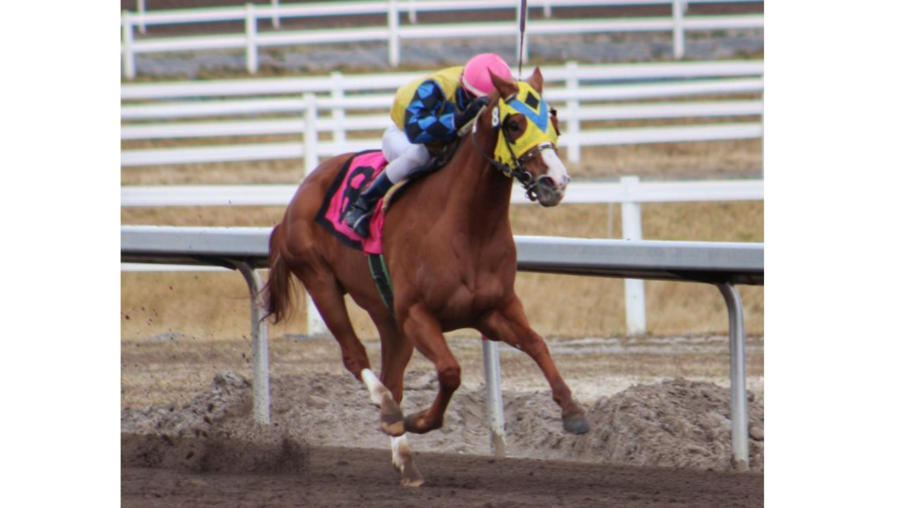 Thumbnail for Alberta: Hidden Grace, 'Wizard Among Winners of final Century Downs Stakes Races
