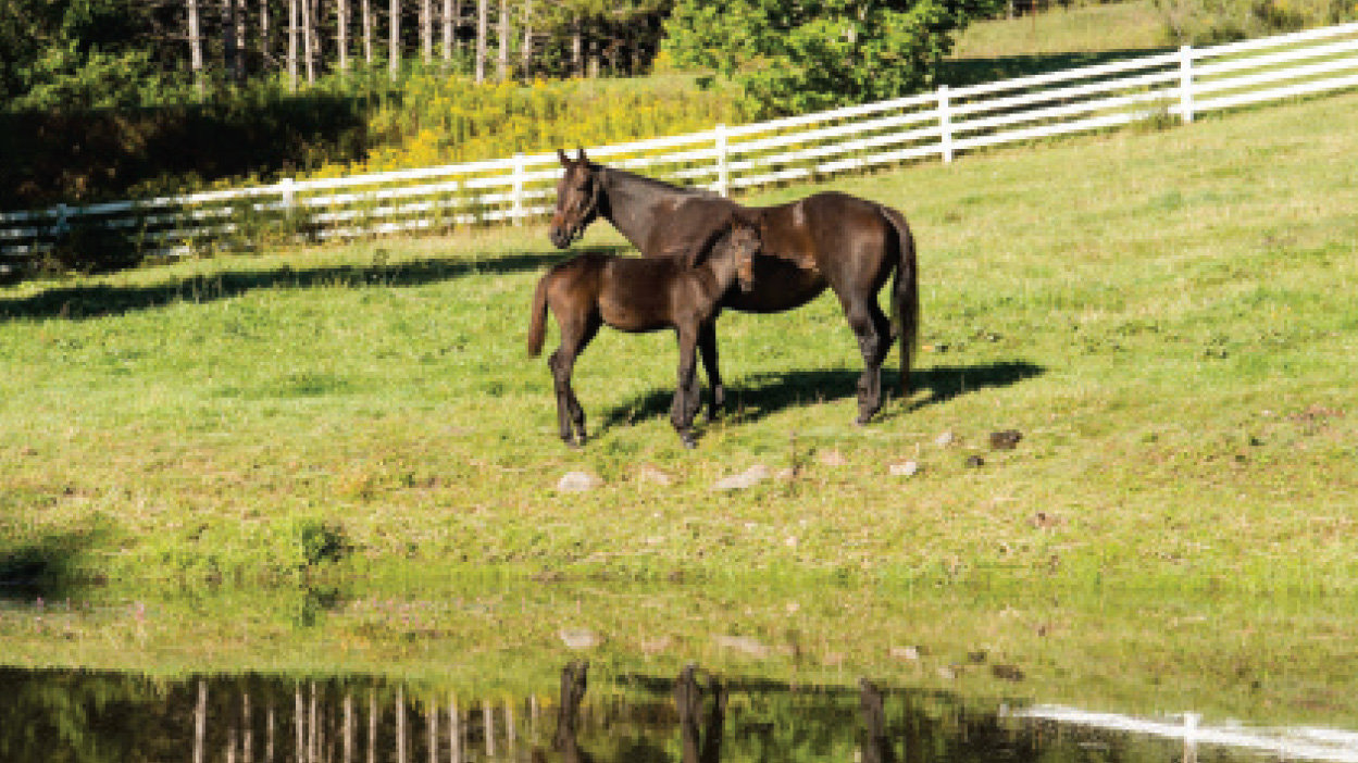 Thumbnail for State of Emergency in the Thoroughbred Breeding Business