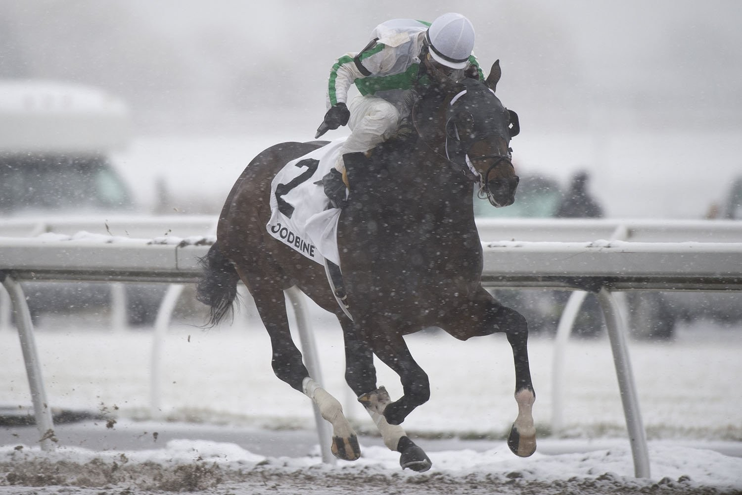 Thumbnail for Final Day of 2019 Woodbine Season Today: Eurico rides into Sunset, Tiller goes for 2000