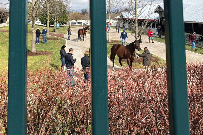 Thumbnail for Canadians In Action on Day 1 of Keeneland January Sale