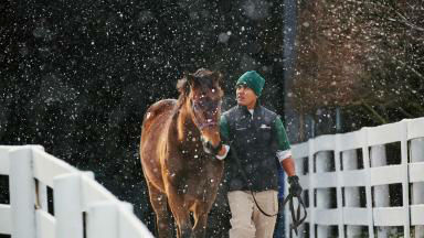 Thumbnail for January Keeneland Sale Begins Monday with 1,800 Catalogued