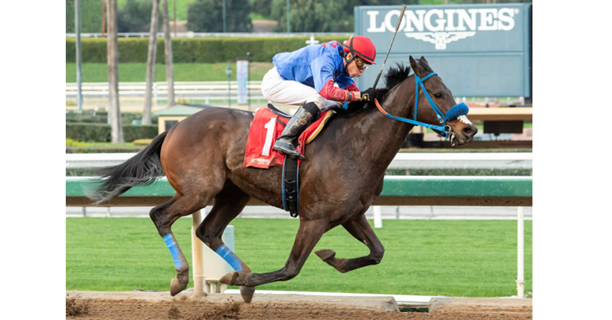 "Mongolian Groom Breeders' Cup Breakdown: Opportunities ""Missed"""