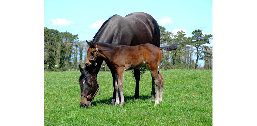 The Mare Recruitment and Purchase Programs have been established in the hopes of strengthening the province's Thoroughbred breeding and racing industry.
