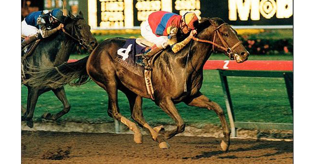 Thumbnail for A.P. Indy 1989-2020; A Modern Day Legend who raced at Woodbine