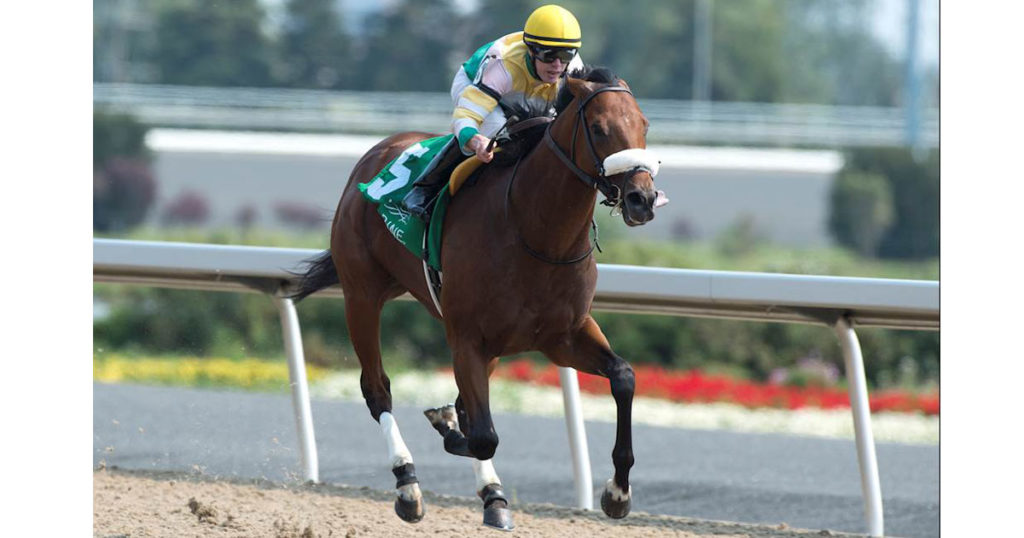 YORKTON is a graded stakes winner in Canada and a finalist for Champion Sprinter for 2019 - MICHAEL BURNS PHOTO