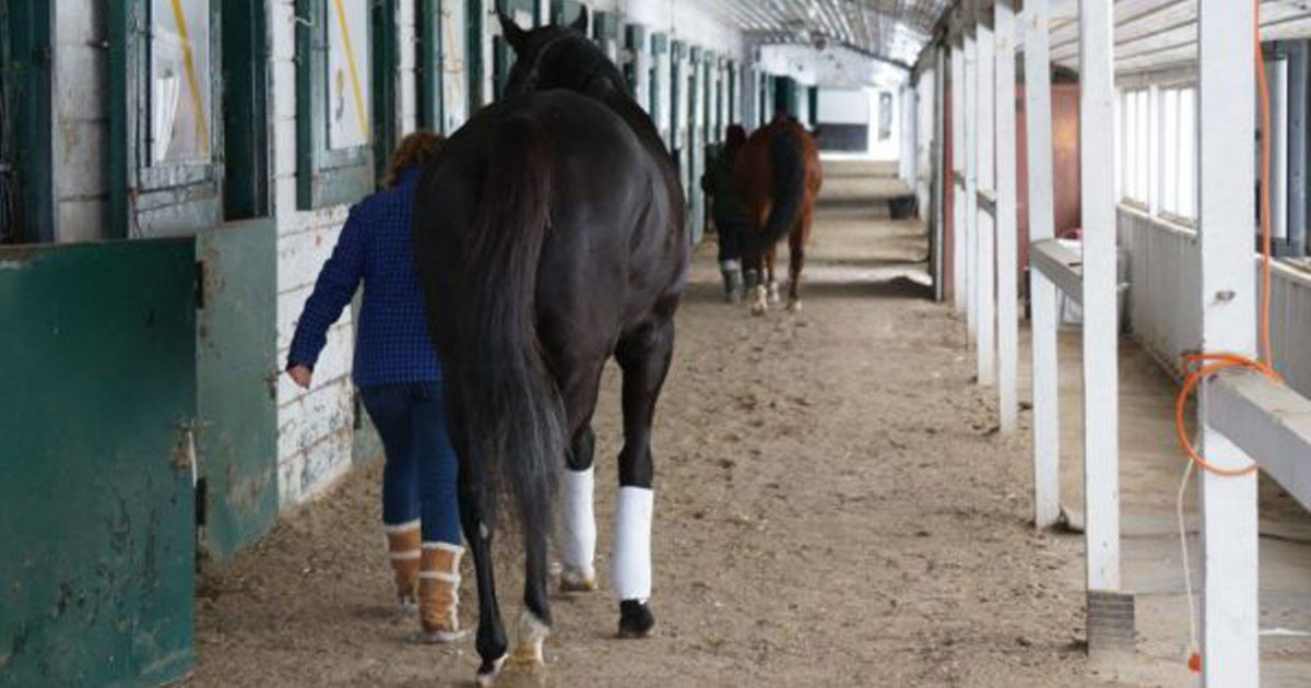 Thumbnail for Horsepeople Return to Woodbine; Horses Arrive Feb. 26