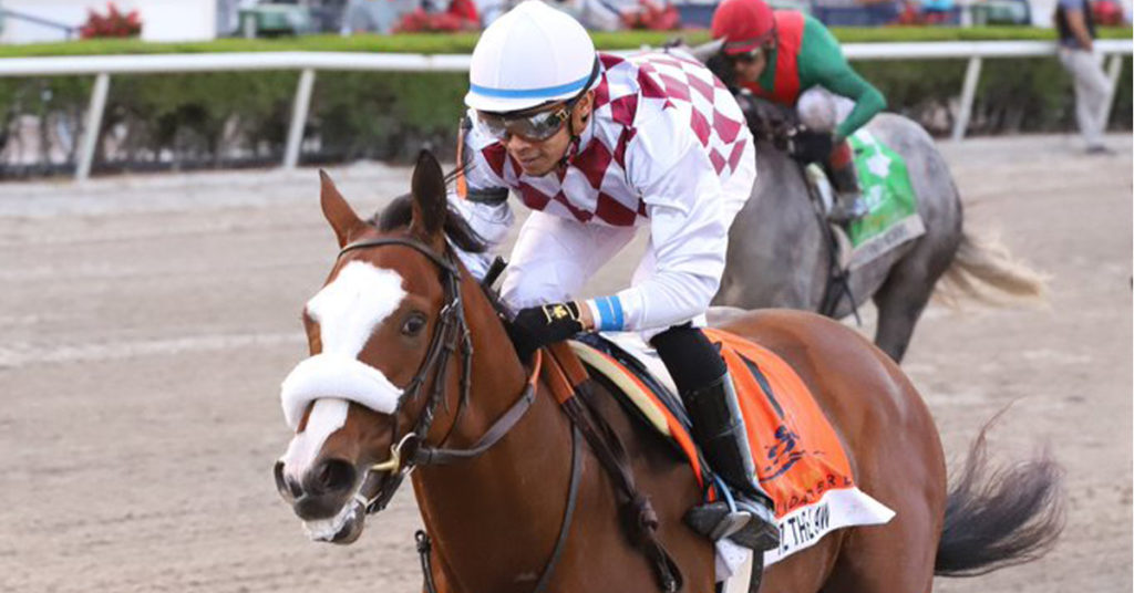 TIZ THE LAW crushed in the Florida Derby (G1) but where will this sensational colt be able to race next?