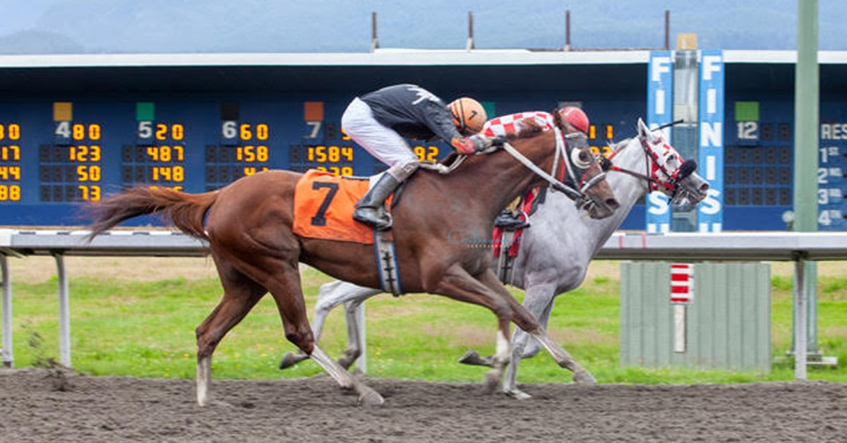 ZEN BABY wins for North American Thoroughbred Horse Company - PATTI TUBBS PHOTO