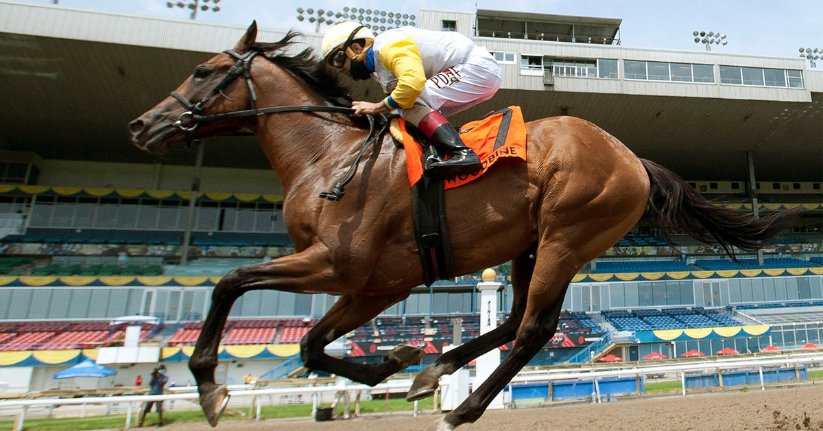 SHIRL'S SPEIGHT, shown winning the Grade 3 Marine Stakes at Woodbine, could test his talent on dirt and in the US soon, perhaps even the Kentucky Derby (G1) - Michael Burns photo