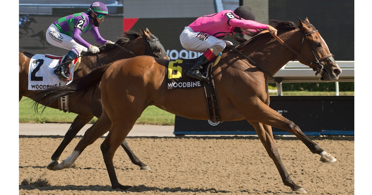 Thumbnail for Seagram Stakes at Woodbine Shapes Up to be Eclipse Rematch