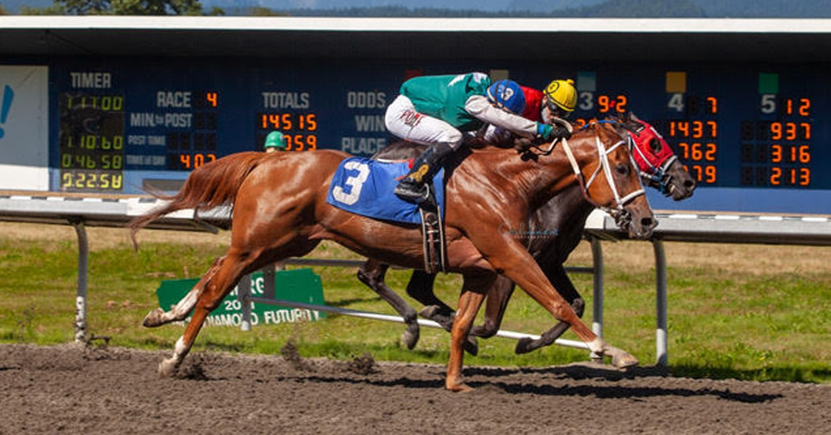Thumbnail for Alberta's Biggest Race of the Year – 91st Canadian Derby (G3)