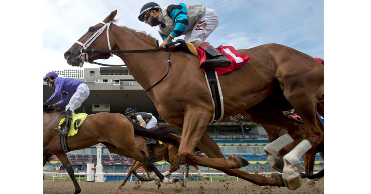 Thumbnail for Young Guns: Sunday July 12 Woodbine Wrap, Ones to Watch