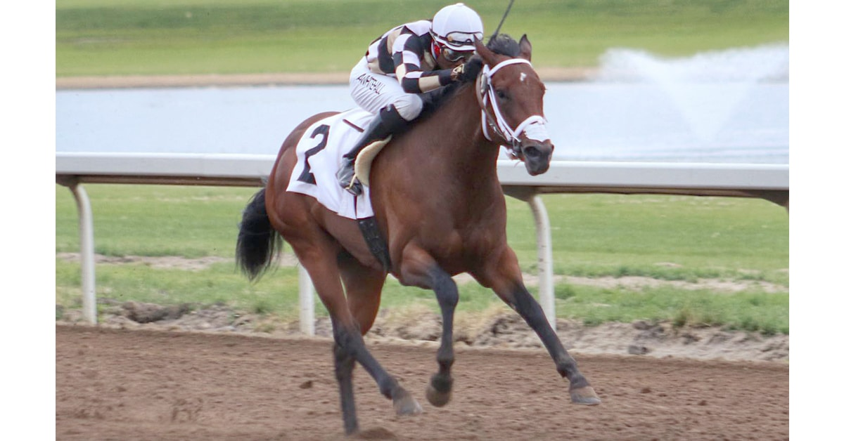 Thumbnail for Alberta Wrap: Craig Smith Has Sights on Leading Trainer