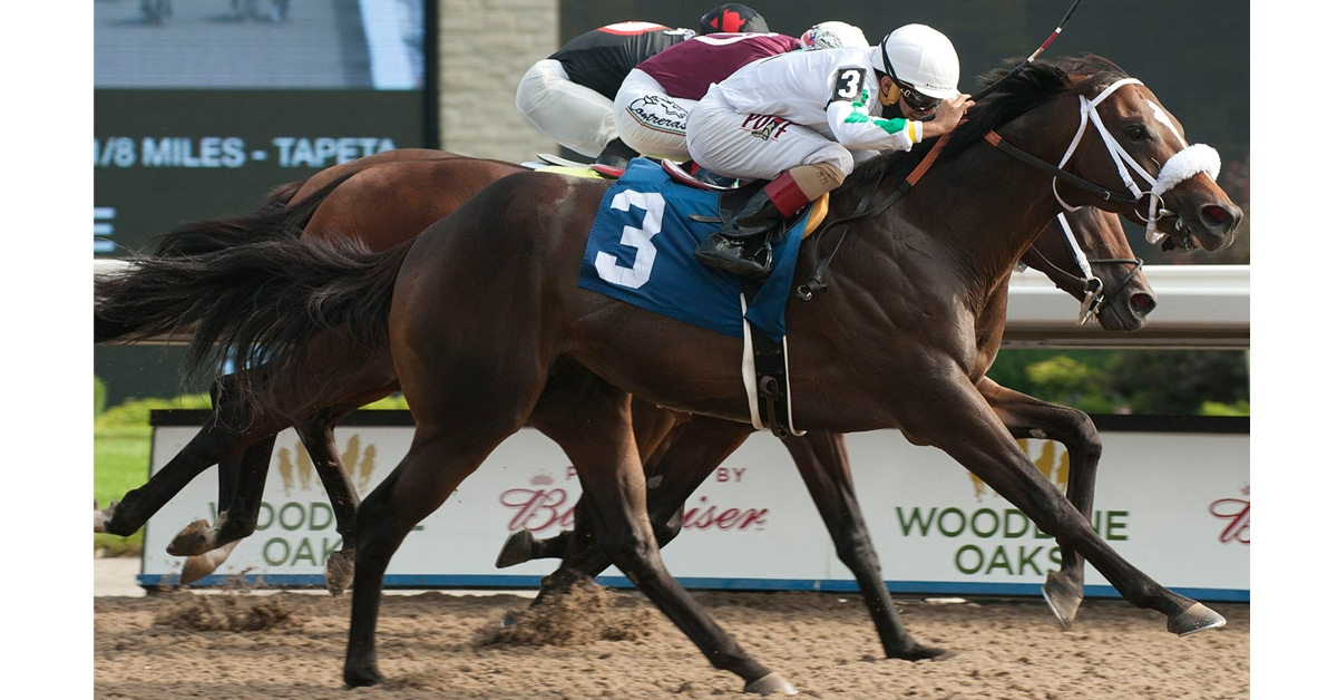 Thumbnail for Road to the Queen's Plate Heats Up as Clayton Connects in Plate Trial