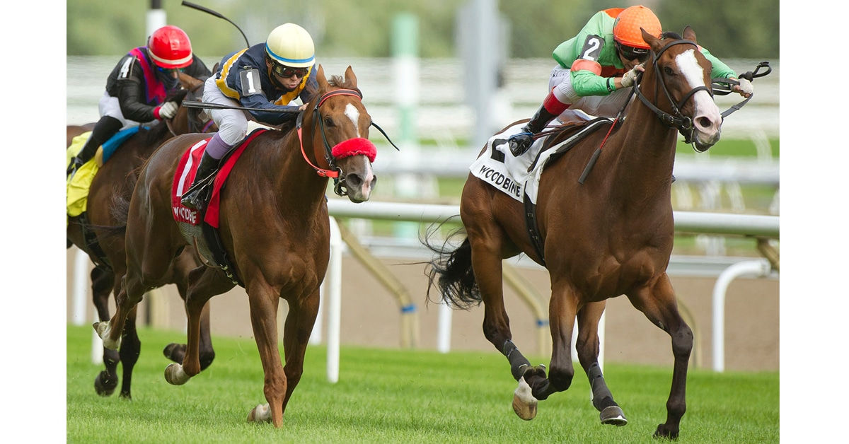 Thumbnail for Forester's Turn Triumphs in Greenwood Stakes at Woodbine