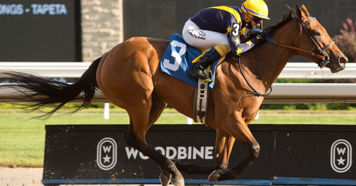 BOARDROOM bossed around the boys Thursday and is unbeaten in 2 races at Woodbine - MICHAEL BURNS PHOTO