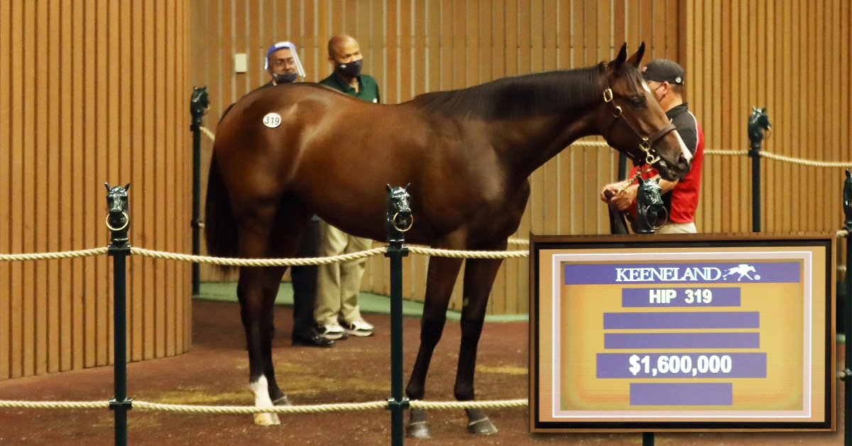 Thumbnail for David Anderson Sells $1.6 million Ontario Bred Filly at Keeneland