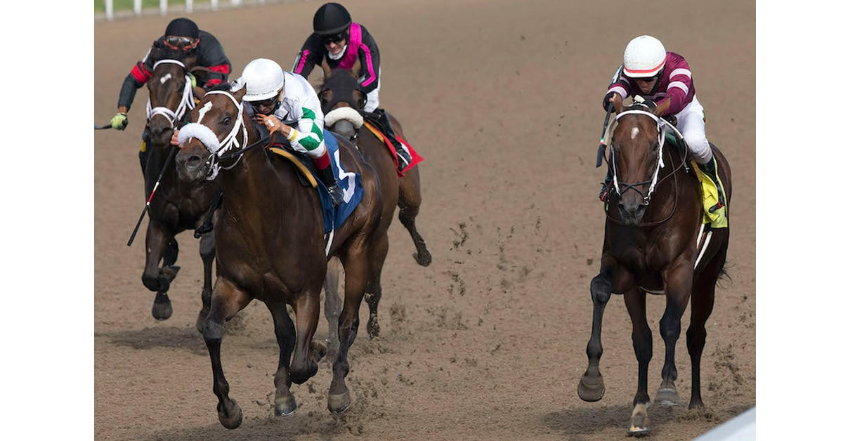 Thumbnail for Clayton Headed to Prince of Wales Stakes at Fort Erie