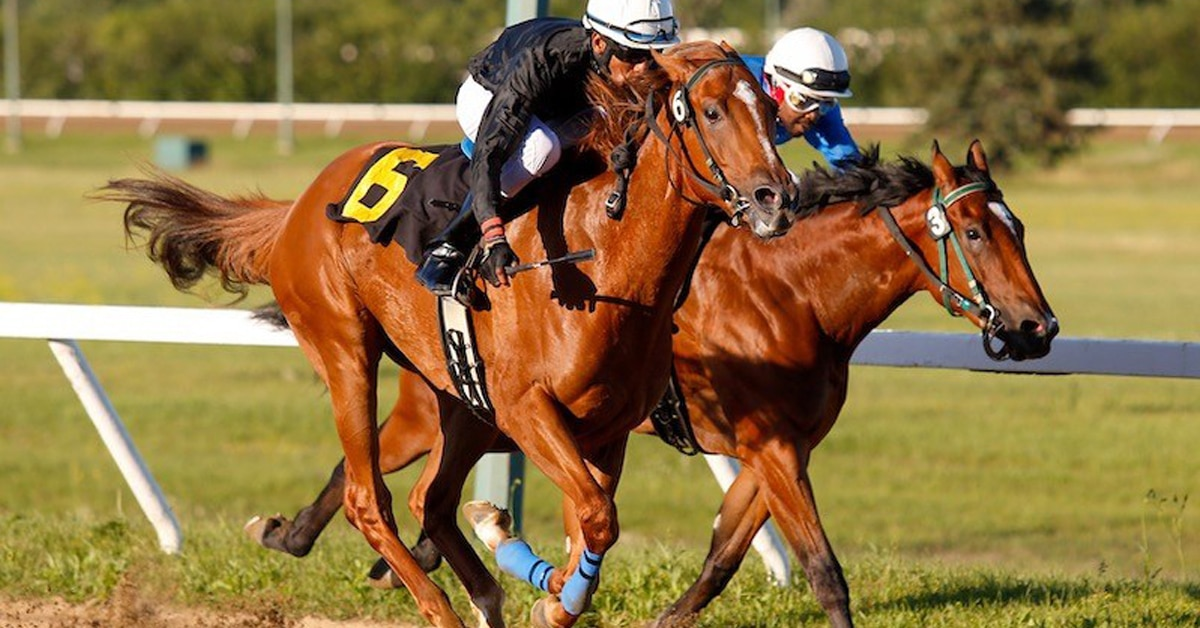 Thumbnail for Assiniboia Downs Gains Stability From $63 Million Season