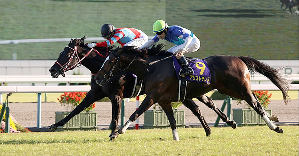 Thumbnail for Contrail Claims Japanese Triple Crown With Gutsy St. Leger Win