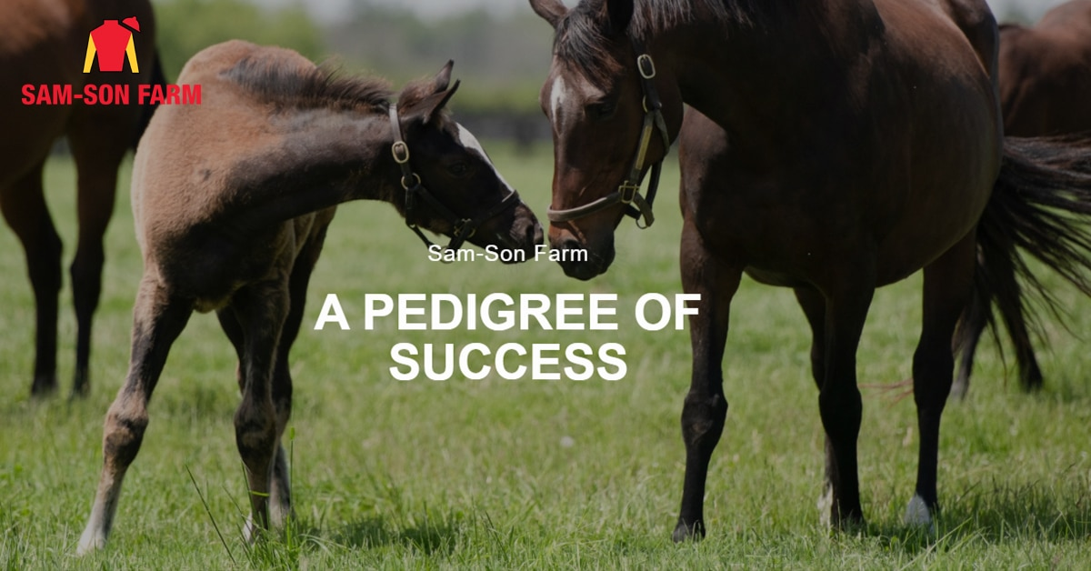 Thumbnail for Sam-Son Farm to Disperse Breeding and Racing Stock