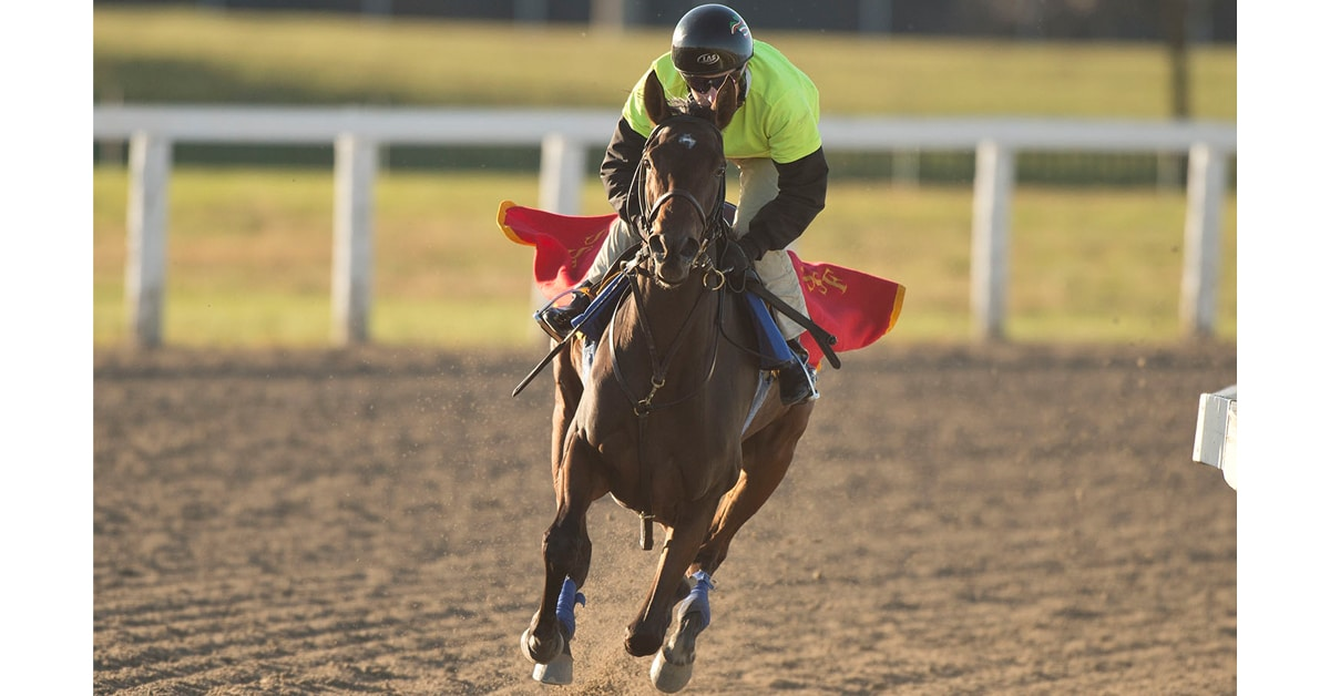 Thumbnail for A Star-Studded Stakes Sunday Featured at Woodbine