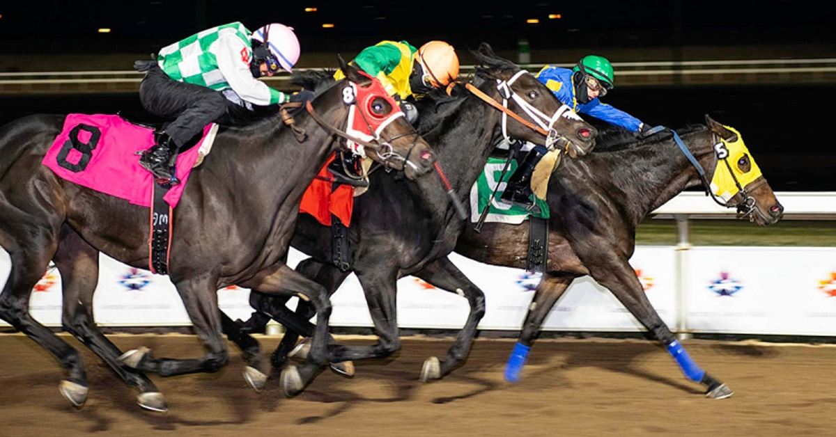 Thumbnail for Dan and Deb Hurley's Solo Ring Grabs CTHS Sales Stakes Victory