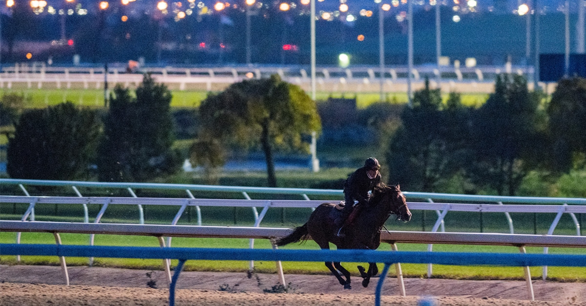 Thumbnail for HBPA / Woodbine In Discussions with Government For 2020 Season