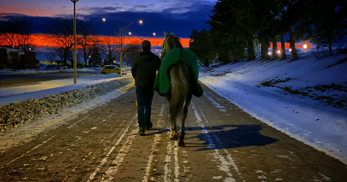 Thumbnail for Horsepeople Band Together To Plea For Completion of Woodbine Season