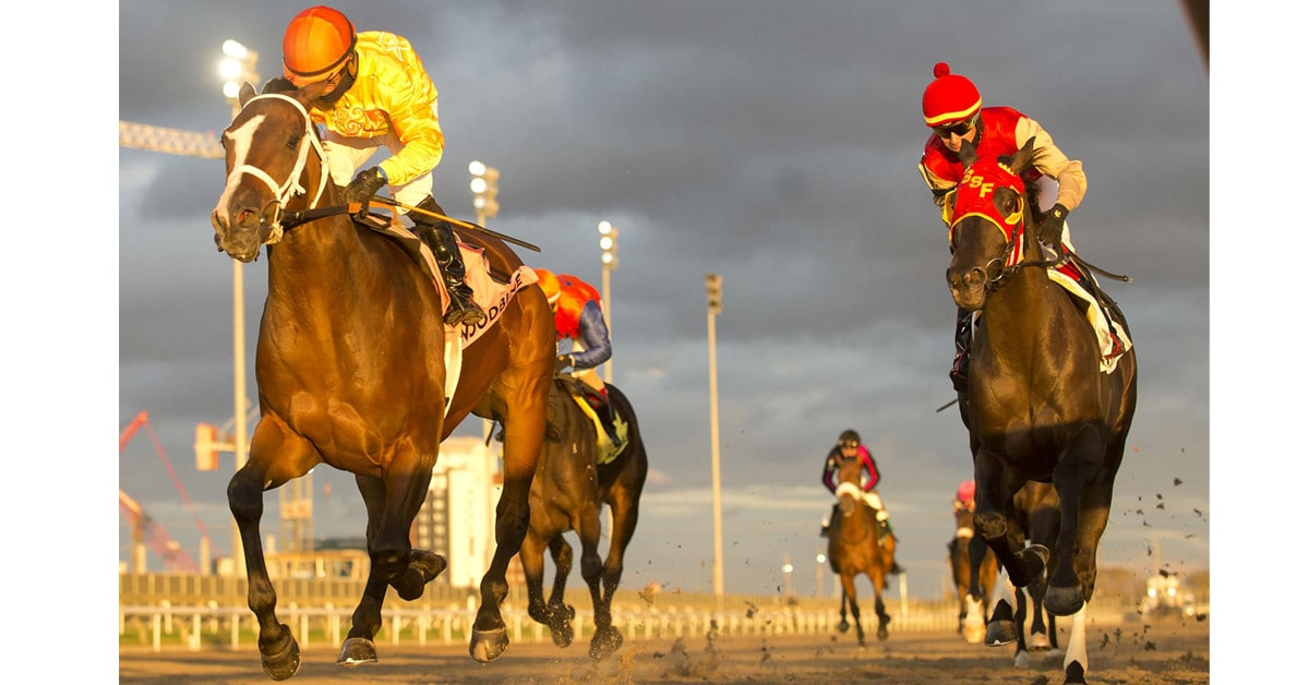 Thumbnail for Woodbine Sunday: Stephen Makes a Name for Himself