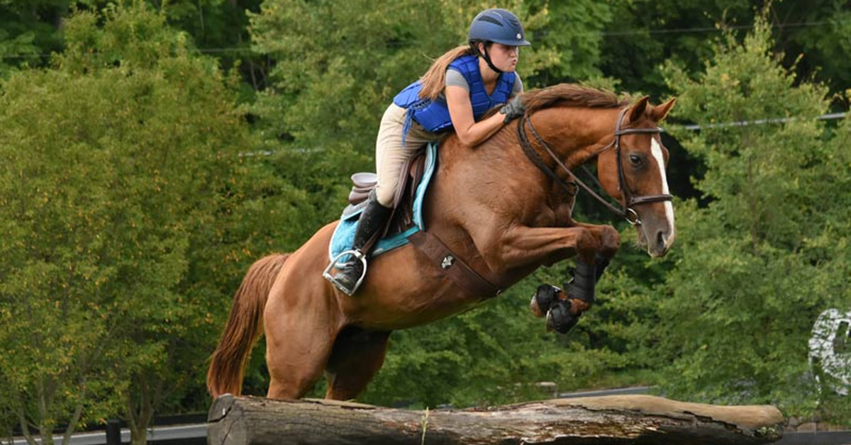 Thumbnail for Mistaken Identity: Rescued Mare in Maryland Is Not Canadian Star