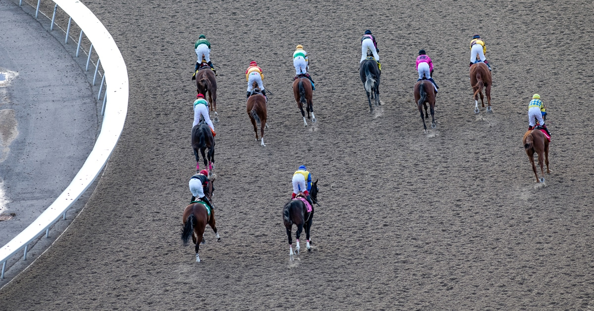 Thumbnail for Participate in Equine Guelph's Ontario Racing Survey