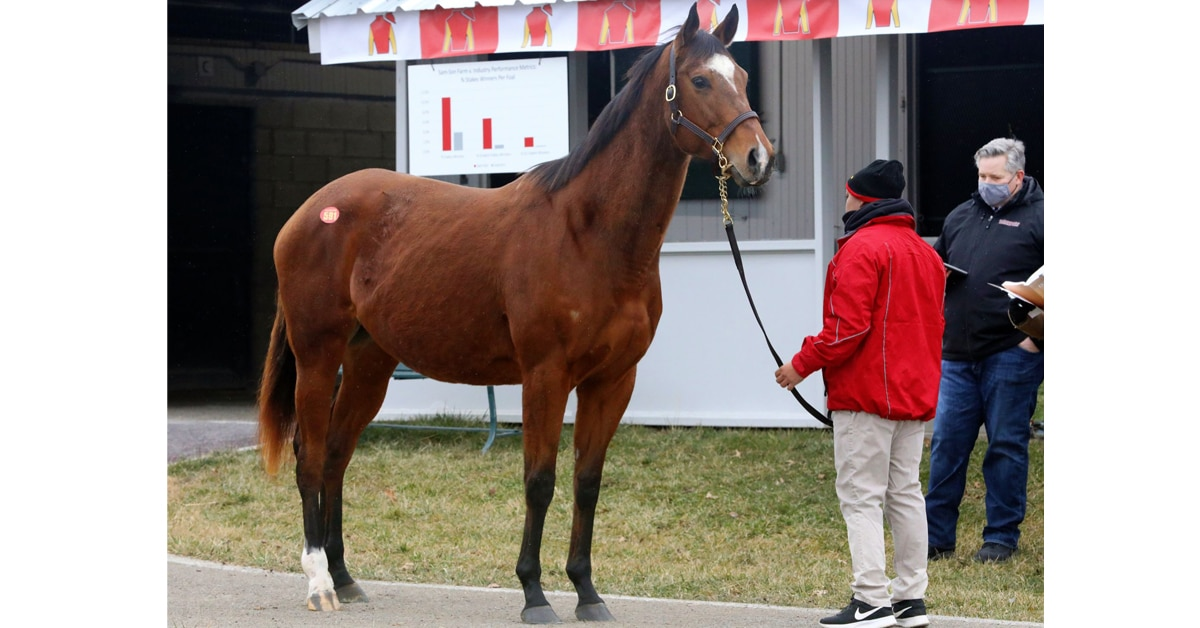 Thumbnail for Canadians Continue to Buy at Keeneland January Sale