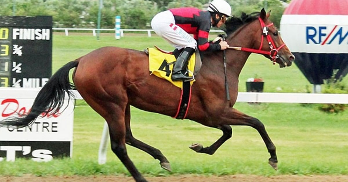 Thumbnail for Escape Clause, Manitoba's Greatest Horse, Has First Foal