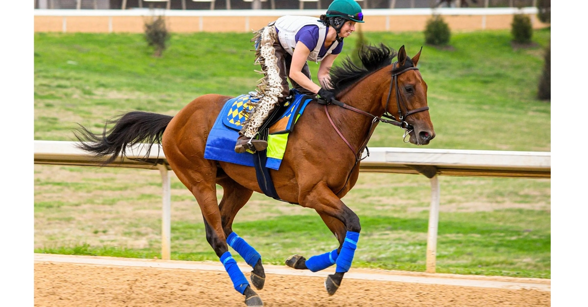 Thumbnail for Concert Tour Headlines $1 Million Arkansas Derby