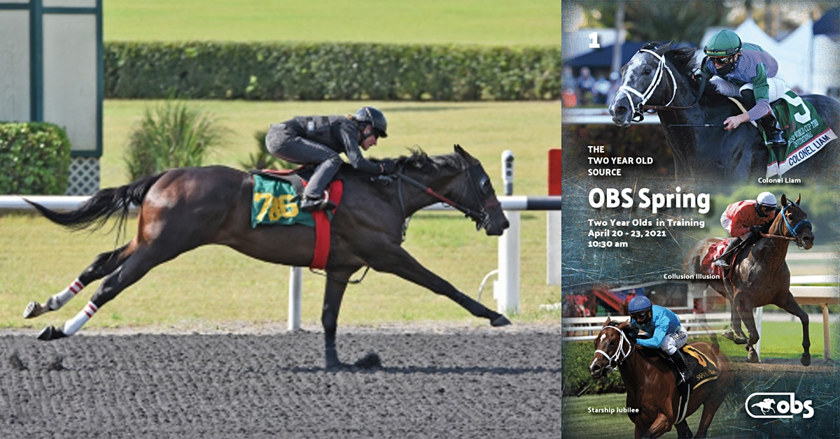Thumbnail for Ocala Breeders' Sales April Two-Year-Old Sale Next Week