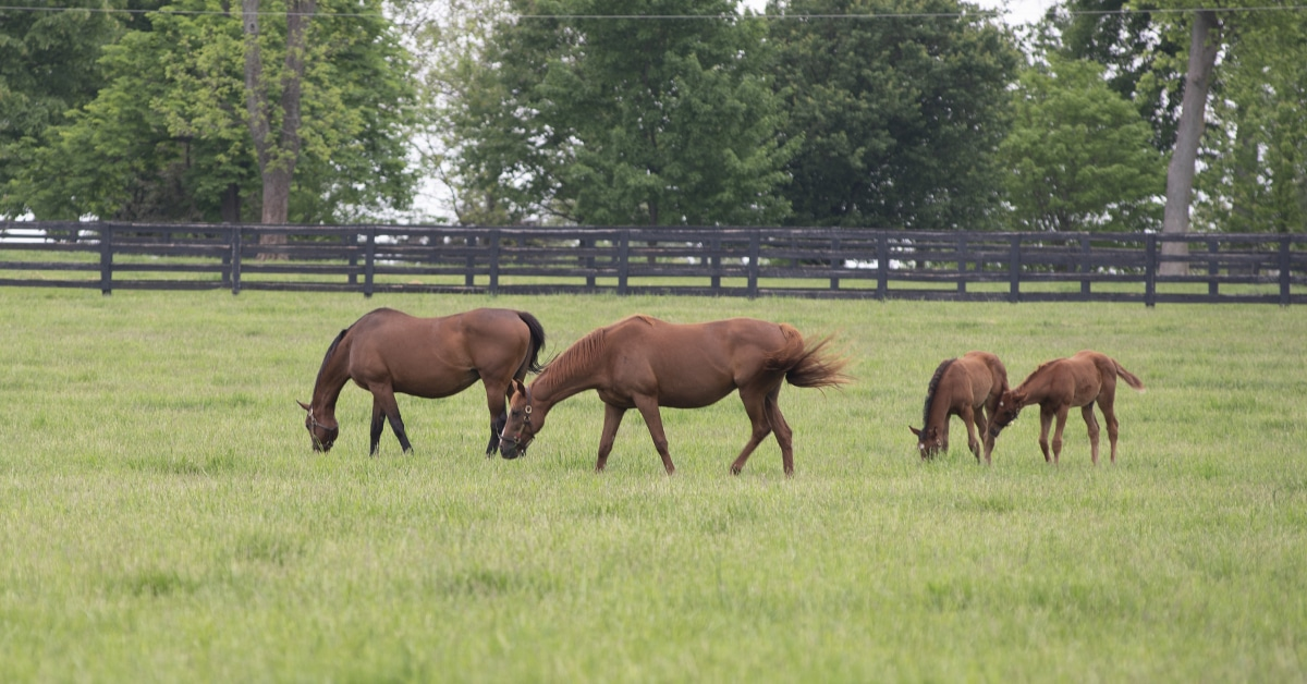 Thumbnail for Breeders Can Expect Ontario Live Foal Program Payments Soon