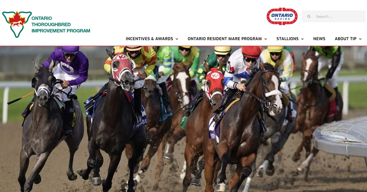 Thumbnail for OR Launches New Thoroughbred Improvement Program Website